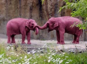 pink-elephants (1)