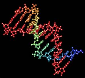 Graphic of DNA section. Credit MIT.