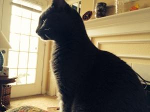 Profile shot  - great cat, rookie photographer