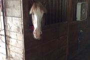 ITNJ Horses