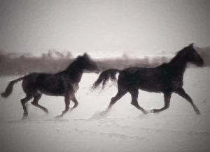 INTJ, Dreams, Horses, PTSD