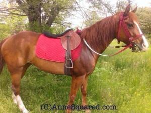 INTJ Horse PSTD